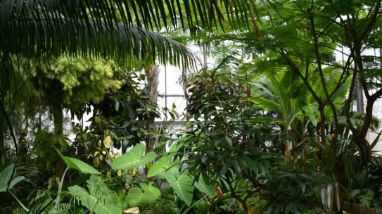 Le 8 octobre vente de plantes aux serres de l'uB
