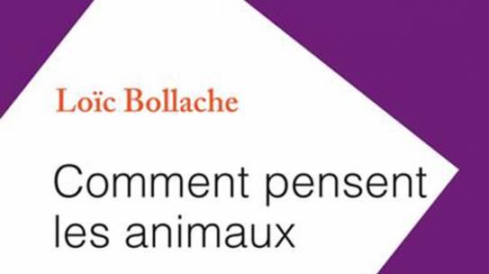 Loïc Bollache remporte le prix Jacques Lacroix 2021 de l'Académie Française